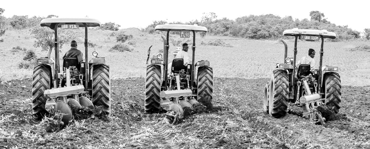 Tractors ploughing
